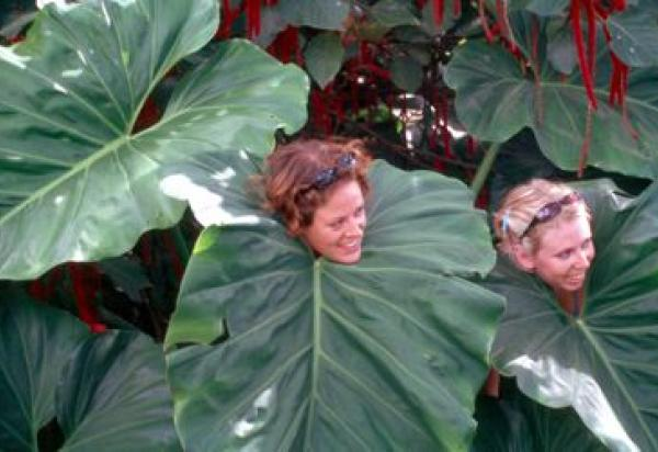Two students with their heads in a gigantic leaf