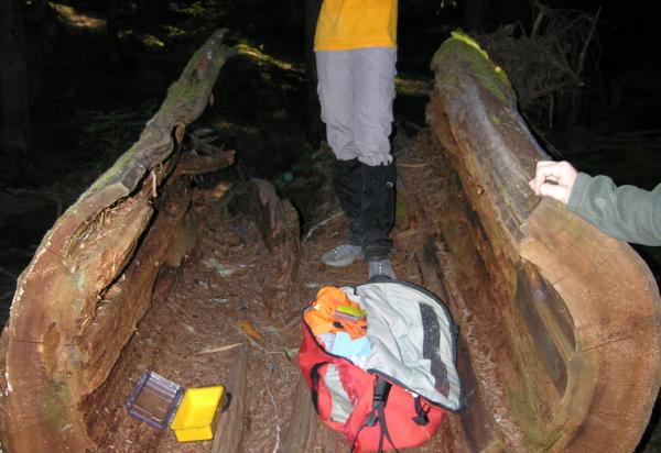 Student standing in hollowed out log
