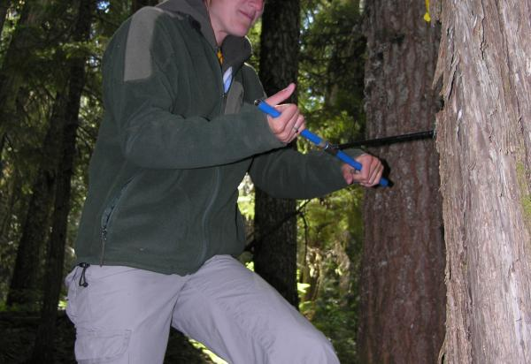 Student taking a tree core