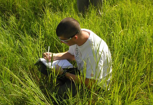 Note taking in tall grass