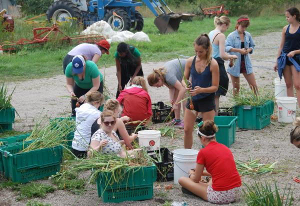 Students picking onions